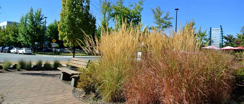 Harbourside Estuarine Grasses